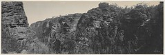 Panorama of Blue Mountains scenery at Leura, 1903 / by Melvin Vaniman (State Library of New South Wales collection) Tags: statelibraryofnewsouthwales panorama