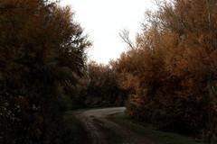 IMG_7251 (aliceziosi) Tags: comacchio valli valle nature landscape italy winter christmas canon blackandwhite horizon details sky