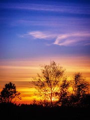 October light, Norway (Vest der ute) Tags: g7x norway rogaland haugesund trees silhouettes sky clouds sunset fav25