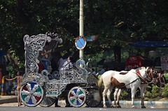 Horse drawn carts at the Victoria Memorial (victoriaei) Tags: india calcutta kolkata october outdoors streetscenes horse horses carriage cart horsedrawn piebald silver victoriamemorial travel d5300 indianstreetphotography streetphotography asia nikon