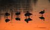 _B4A0009 (wjdweerdt) Tags: birds vogels watervogels ganzen oostvaardersplassen flevoland