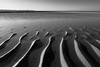 Sand Ripples (tabulator_1) Tags: sands ripples ainsdale southport