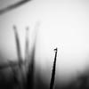 Cliffhanger (Zeeyolq Photography) Tags: hmbt blackandwhite cliffhanger drop monochromes nature simplicity milizac bretagne france