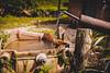 Parque Nacional de Itatiaia (upslon) Tags: apé aventura cachoeira caminhada caminho centrohistórico conservação escravos estradareal grupo história itatiaia mato minasgerais mirante montanha nascente natureza ourobranco ouropreto parque percurso pessoas ponte rio trekking trilha vegetação viagem vista brazil br