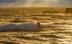 Port Macquarie Surfers.jpg (mailrobertsev) Tags: surf beach portmacquarie northcoast holidays newsouthwales australia au surfer sunrise