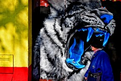 in the jaws of life (Zlatko Vickovic) Tags: street streetphotography color novisad srbija serbia vojvodina zlatko vickovic lightandshadow shadow urban city streetcolor people zlatkovickovicphotography