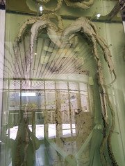 The Giant Squid (roamingtummy) Tags: taichung taichungcity taiwan tw theroamingtummy nationalmuseumofnaturalscience travel museum giantsquid squid