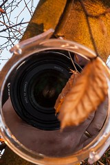 dogwood52week4 (leppre) Tags: dogwood2017 miror leaves autumn goldenbrown brown canon24105mm reflection tree dogwood52week4 inishowen ireland donegal