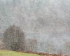 Squall (matrobinsonphoto) Tags: tree snow trees field rural cold scenic beautiful blizzard weather snowing heavy white out uk british pitlochry tummel valley landscape outdoors wind
