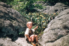 Chuck and prickly pear cactus Pine Mtn KY June 1955.jpg (buddymedbery) Tags: years 1955 family kentucky unitedstates 1950s chuck