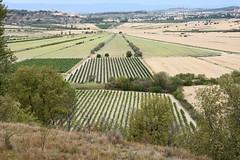 Radial Asymmetry (Tudor G.) Tags: languedoc etang montady france enserume weinberg vignoble vineyard herault
