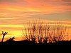 Evening Glory (bimbler2009) Tags: panasoniclumix tree silhouette outdoor landscape serene sky cloud sunset dusk