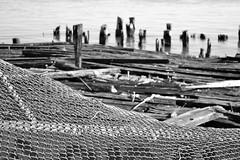 Neglected (KaDeWeGirl) Tags: newyorkcity bronx huntspoint pier dock chain link fence bw
