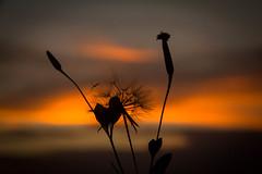blossom before going down.jpg (nisanisarah) Tags: sunset nature balikpapan