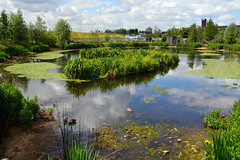 Waterglades / East Village (Images George Rex) Tags: uk england eastvillage london ecology reflections unitedkingdom britain wetlands recycling stratford watertreatment ccbyncsa waterglades imagesgeorgerex photobygeorgerex thewatergladeswetlands