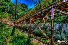 PUENTE_edited (Douviant Pey Bureau Guerola) Tags: naturaleza pez verde water rio river puente arbol agua plantas cables viejo hdr perilla corriente cascada xalapa oxidado vegetacion xico abandonado