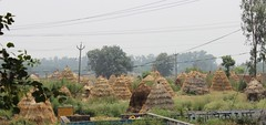 A #village scene near #Yamunanagar #Haryana.   #Bio #Fuel is stored in these #structures. #art #rural #India (Anil.Yadav1) Tags: india art rural village structures bio fuel haryana yamunanagar
