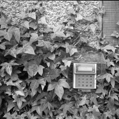 Green Security (A.Sundell) Tags: flowers urban bw flower classic tlr vintage garden blackwhite superb kodak sweden tmax antique voigtlander retro d76 german uppsala handheld epson blomma sverige v600 tmax400 blommor voigtländer 30s twinlensreflex westgermany cla antik skopar f35 svartvit trädgården botaniska uppland 75cm voiglaender