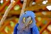 DSCF4874 (desmond077) Tags: wildlife parrot papagai parrotatsandiegozoo