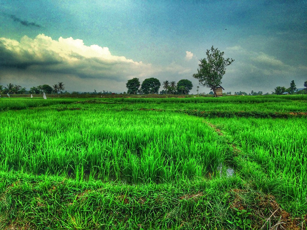 The World S Best Photos Of Hdr And Sawah Flickr Hive Mind