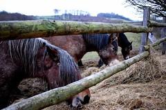 three (jessie_with_the_camera) Tags: horse horses riding animals nikon cute kawaii nature