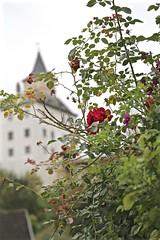 Briar Rose and the Castle (smilla4) Tags: roses castle rozmberkcastle rozmberknadvltavou czechrepublic depthoffield bokeh