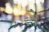 (subtitulo {em}) Tags: winter forest snow macro nikon nikkor35mm 35mm bokeh nature photography