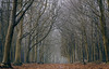 Winter wood (Colin-47) Tags: woodland woods forrest trees bare pine larch beech winter december 2016 colin47 eos6d ef70200mmf4lisusm norfolk wittonwoods mist nature
