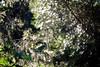 ginepro di sardegna (stefano7400) Tags: swirl yashica yashinon 32mm f17 32cm bokeh bosco albero ginepro