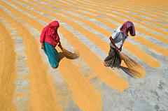 Working together! (ashik mahmud 1847) Tags: bangladesh d5100 nikkor working people man woman line pattern texture colorful