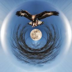 Golden Eagle Globe HSS (superdavebrem77) Tags: sliderssunday composite globe fantasy moon goldeneagle