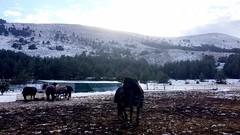 Hiver 2k17 : Grasse (Elena Teim Photographie) Tags: campagne caussols grasse montagne natur naturaleza nature vert verde verse brown marron cheval horse elevage