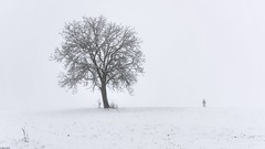 *The Winter Walk* - *Der Winterspaziergang* (Albert Wirtz @ Landscape and Nature Photography) Tags: albertwirtz südeifel eifel moseleifel eifelmosel snow nebbia niebla brume deutschland germany rheinlandpfalz rhinelandpalatinate derwinterspaziergang winterwalk mist fog birnbaum wanderer hiking wandern wintermagic wiese meadow bergweiler kreisbernkastelwittlich wittlich winterbeauty valleyofthemorningmist taldermorgennebel