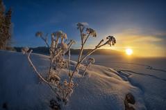 In the spotlight (Kari Siren) Tags: light winter sunrise frost snow lake karijärvi jaala finland