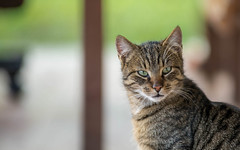 kittens (33) (Vlado Ferenčić) Tags: catsdogs animals animalplanet kitty kittens cats nikkor8020028 nikond600 zagorje croatia hrvatska hrvatskozagorje