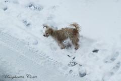 UN FREDDO DA CANI  :) (Margcoss) Tags: dog cane animale winter inverno neve
