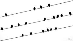 Pajaros... (Iurgi.) Tags: pajaros birds blanco negro white black lineas line iurgi inda