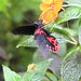Tropical Butterfly House, Wildlife & Falconry Centre, North Anston