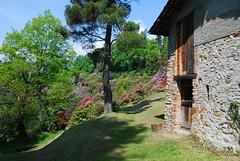 1205_Parchi_Burcina_Biella_3557 (UrBert) Tags: park flowers red italy parco tree alberi fiori biella montagna baita burcina