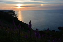 Flowers in the sunset. (Lee1885) Tags: flowers sunset sea sun water night dark nikon trinity jersey whiterock channel rozel channelisland