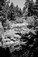 Japanese Garden (colinpoe) Tags: 120 620 6x9 bw blackandwhite ektarlens japanesegarden kodakmedalist medalist medalistii pond portlandjapanesegarden rodinal150 strollingpondgarden trix trix400 foliage mediumformat rangefinder redfilter reflection reflections