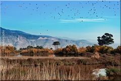 Ribera de la Algaida (juanmerkader) Tags: aguadulce almería andalucía andalusia españa europe flora nikond750 photovida picture spain travel coast nikon pic picofftheday water