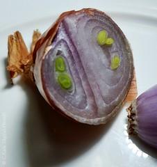 allium.ascalonicum (C.Kalk DigitaLPhotoS) Tags: schalotte shallot zwiebel edelzwiebel gemüse vegetable schichten layers macro makro fresh querschnitt crosssection grün green lila purple weis weiss white
