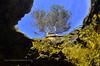 Primer finalista - Otra fauna (Xavier Mas Ferrá) Tags: gamba crustáceo árbol fauna palaemon quisquilla azul mar costa mediterráneo mediterraneansea cabrera baleares memorialclimentpicornell afonib