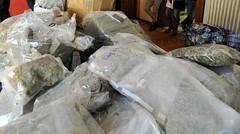 Napoli: utilizzavano i bambini per confezionare la droga (napoli24ore) Tags: napoli droga bambini camorra