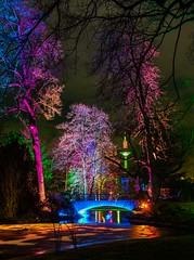 Winter Light Show (marionrosengarten) Tags: frankfurt palmengarten lights colors winterlights bunt farben lightart installation bridge water pond swan winterlichter park nikon sigma18125f56 le longexposure trees plants night dark dunkelheit langzeitbelichtung manualfocus hibernal towerofeurope europaturm brücke eis frozen icy frost schwäne fotokurs photographycourse fotosafari tripod remote spiegelvorauslösung mirrorlockup