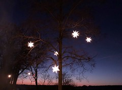serene (BrigitteE1) Tags: serene sunset smartphone peaceful still quiet deutschland germany light color colour sky trees star christmastree cielo december landschaft xmas nature night tree