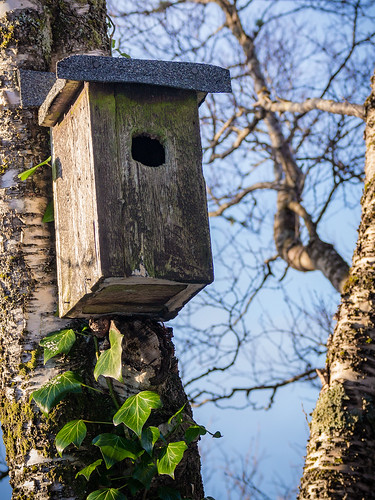 """Abandoned bird house"""