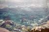 Disneyland 1967 (jericl cat) Tags: disneyland 1967 1960s submarine lagoon water disney anaheim