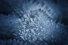 Ice needles (nilsbaum) Tags: makro macro iceneedles eiskristalle